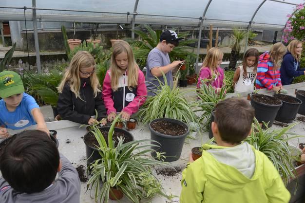 Die Kinder dürfen selber verschiedene Pflanzen umtopfen.
