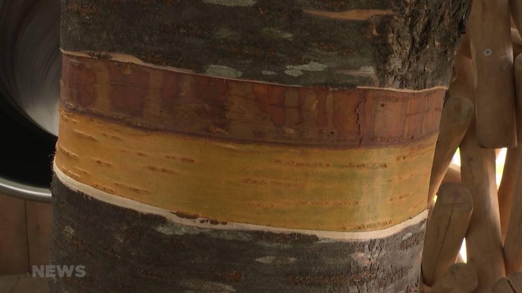 Vandalismus in Steffisburg: Baum in Generationenpark könnte wegen Verletzung absterben