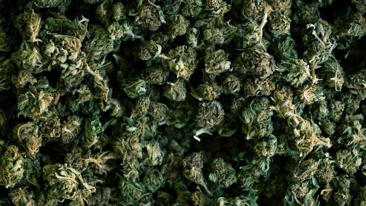Die Polizei hat in der Tessiner Gemeinde Riviera 40 Kilogramm Marihuana beschlagnahmt und zwei Drogenhändler festgenommen. (Symbolbild)