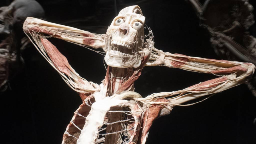«Körperwelten» ist zurück in der Schweiz: Ab heute sind die berühmten Exponate von Plastinator Dr. Gunther von Hagens in Zürich zu sehen.
