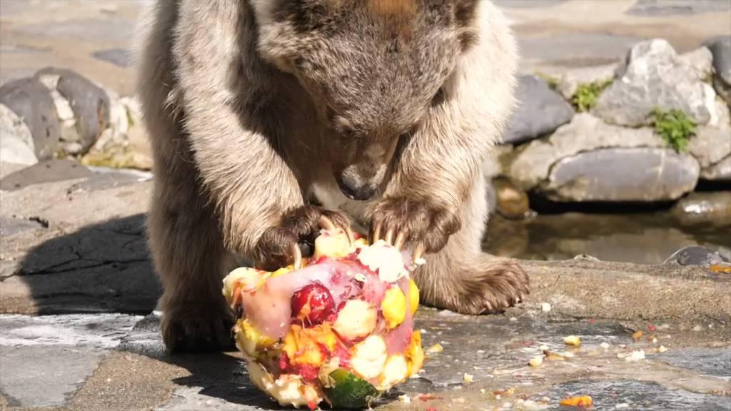Glaces für die Bären