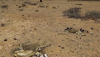 Die Geldpreise gehen an den Bauern Yacouba Sawadogo aus Burkina Faso und den Australier Tony Rinaudo, die sich beide dafür einsetzen, dass dürres, unfruchtbares Land in Afrika landwirtschaftlich genutzt werden kann. (Symbolbild)
