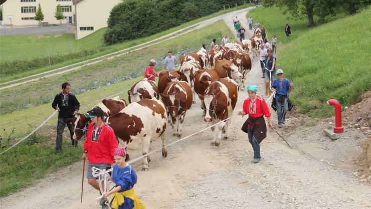 René Gehrig (vorne im roten «Bauernchutteli) führt den «Alpaufzug» an. Damit die Kühe nicht ausbrechen,laufen Helfer mit und sperren die Strasse mit Bändern ab.Urs Gehrig