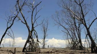 Auswirkungen den Klimawandels: Trockenheit in El Salvador (Archiv)