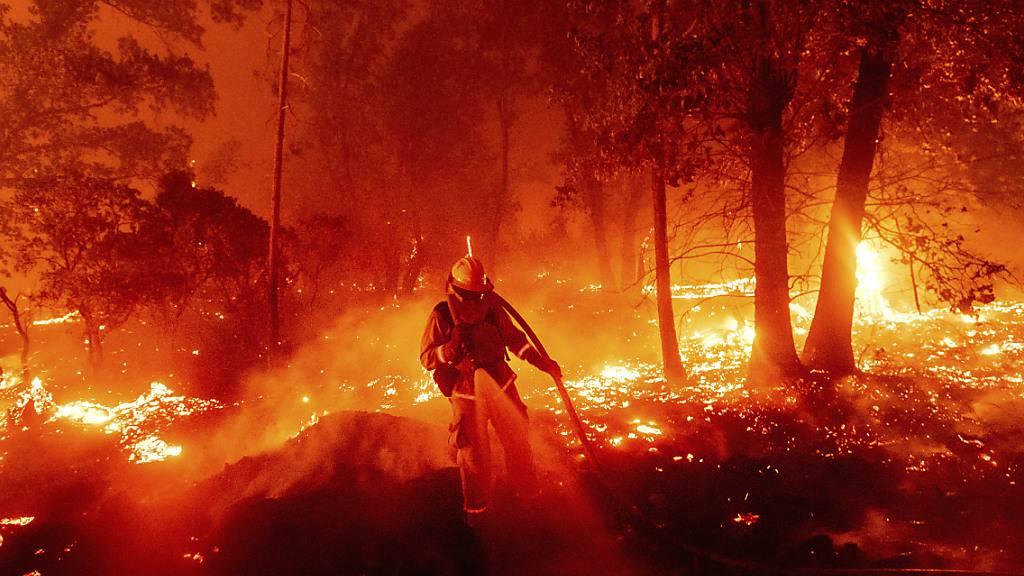 Ein Feuerwehrmann kämpft gegen ein Feuer im Mariposa County. Foto: Noah Berger/AP/dpa