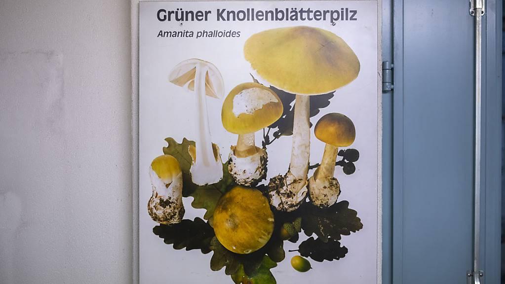 Der «Pilzgift-Mord» hatte in den 90er-Jahren für Aufsehen gesorgt. Ein Mann war mit Hilfe eines Knollenblätterpilz-Extrakts von seiner Frau und deren Liebhaber umgebracht worden. Jetzt ist die Frau mit einem Staatshaftungsbegehren an den Kanton Zürich vor Bundesgericht abgeblitzt. (Archivbild)