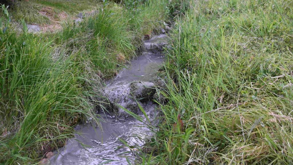 Zement gelangt in Quartierbach und tötet Flusstiere