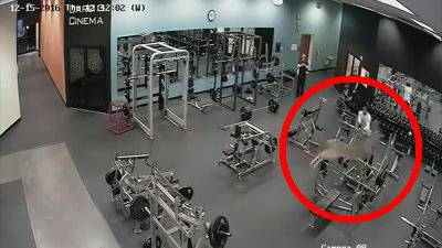 Dieser Besuch erhöhte den Puls der Fitnessstudiobesucher: Reh bricht durch Scheibe und solpert durch den Eingangsbereich