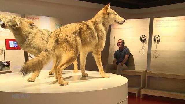 Steht Alpines Museum vor dem Aus?
