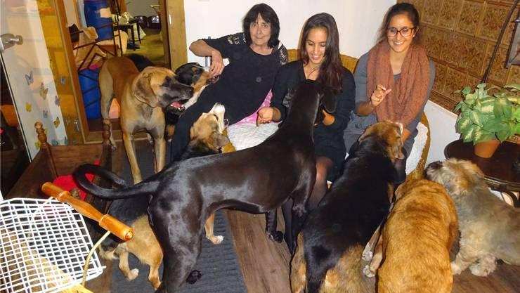 Die Hunde geniessen die Streicheleinheiten von Monika Spoerlé, Janina und Stefanie Sutter. Susanne Hörth