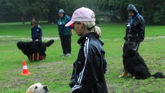 Ende Mai entschied der Kantonsrat, dass Halter von grossen und massigen Hunden von den für sie obligatorischen Kursen befreit werden. Nun haben 62 Mitglieder des Kantonsrates das Behördenreferendum gegen die Abschaffung dieser Kurse eingereicht. Symbolbild