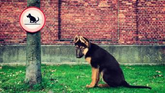 Wenn Hunde auf öffentlichen Plätzen ihr Geschäft verrichten, stehen ihre Besitzer in der Verantwortung, die Hinterlassenschaft zu beseitigen.Symbolbild/Keystone