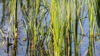 Ein Naturschutzgebiet (Symbolbild)