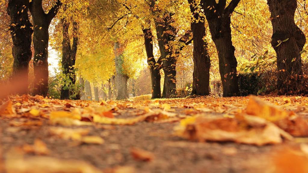 So findest du den schönsten Herbst in der Schweiz
