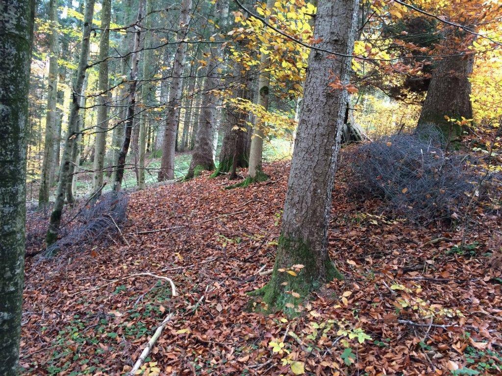 Künftig sollen keine ungenutzten Zäune im Wald herumliegen. (Bild: Peter Weigelt/ stopp-tierleid.ch