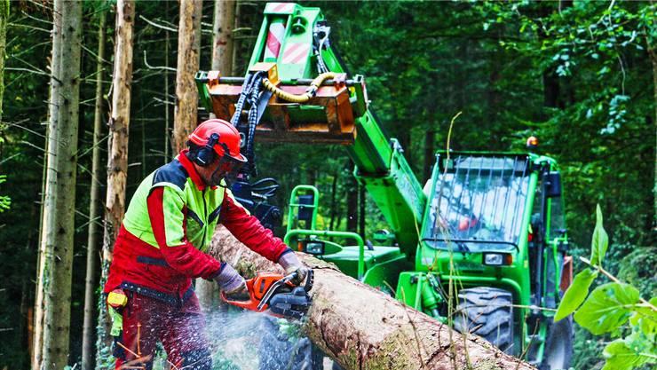 Die Forstwarte, die für den Forstbetrieb Laufenburg/Elfingen beschäftigt sind, haben dort alle ihre Ausbildung absolviert. Dennis Kalt