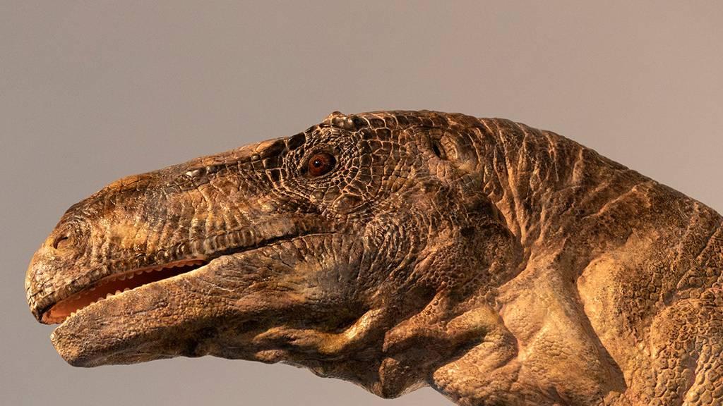 Dinosaurier aus dem Aargau ist neue Attraktion in Zürcher Museum
