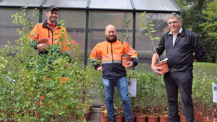 Gärtner Patrick Bräm, Abteilungsleiter Stephan Kündig und Stadtrat Lucas Neff verschenken 460 Jungbäume: Diese sollen das Lokalklima abkühlen.