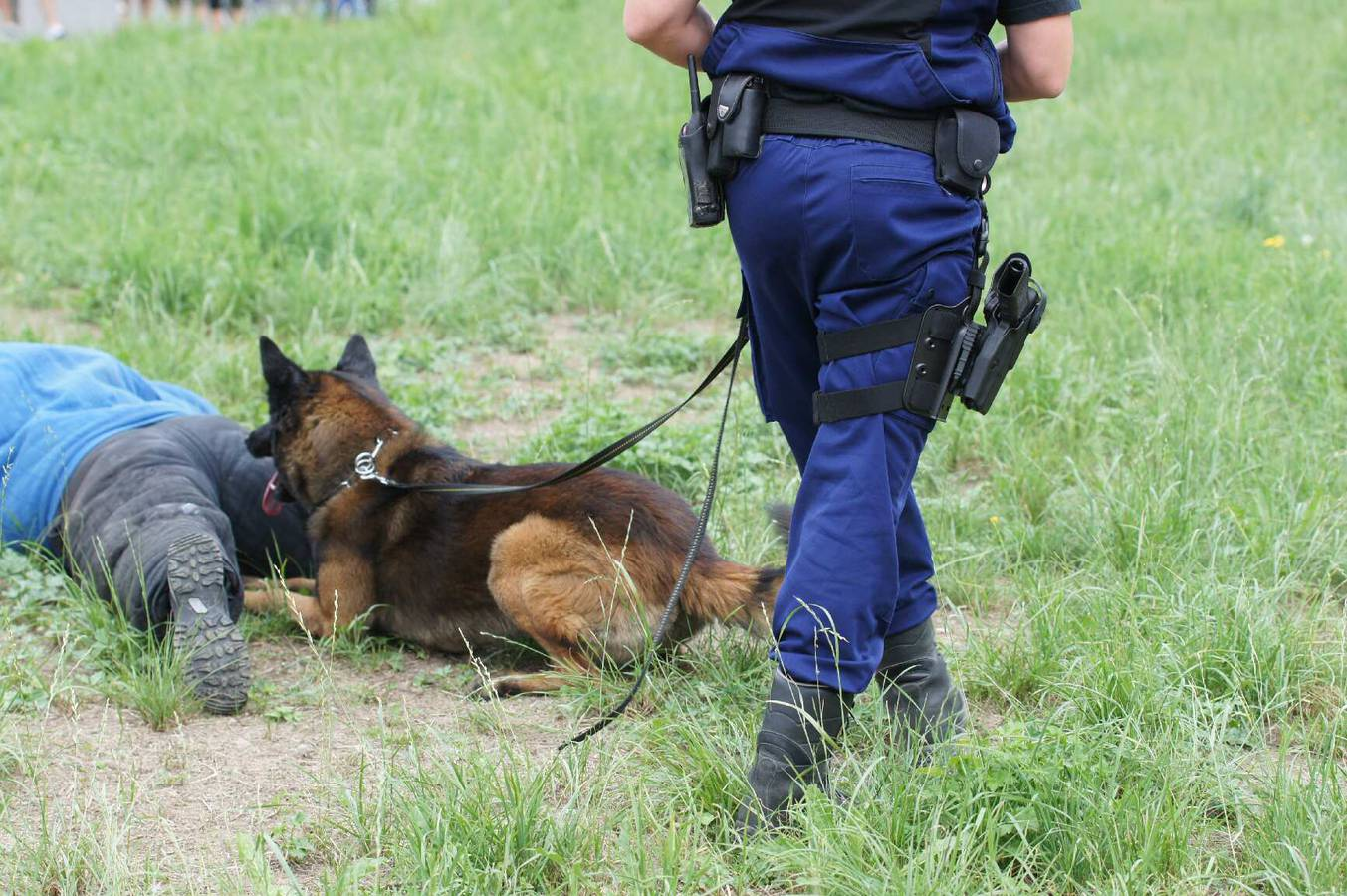 Hunde bei der Kantonspolizei St.Gallen (© Kapo SG)