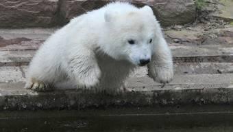 Knut ist erst im Alter von vier Jahren gestorben