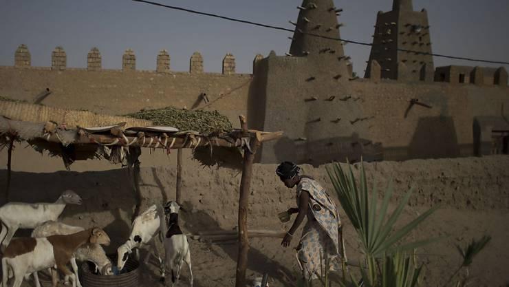Eine Frau und ihre Ziegen vor der Djingareyber-Moschee in Timbuktu. (Archiv)