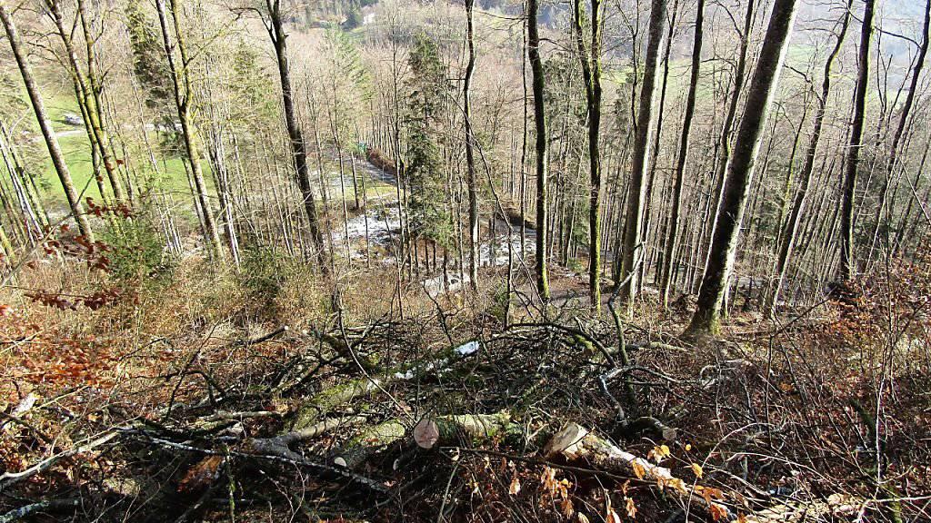 In diesem Waldstück oberhalb Glarus ereignete sich der tödliche Arbeitsunfall.