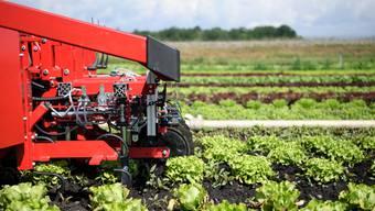 Die Schweizer Landwirtschaft produziert einen grossen Teil der in der Schweiz benötigten Lebensmittel. (Symbolbild)