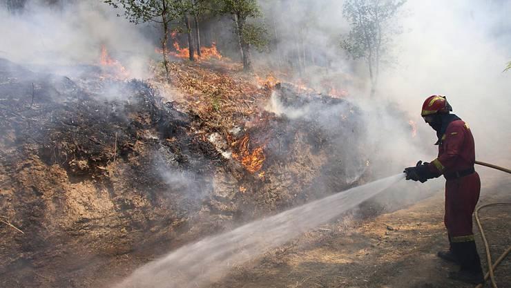 Die Einsatzkräfte haben die Waldbrände in Nordwestspanien unter Kontrolle gekriegt. Mehr als 6500 Hektar Wald waren durch die Feuer zerstört worden.