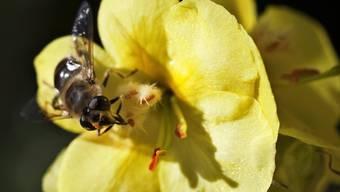 Diesjährige Honigernte sollte gut ausfallen