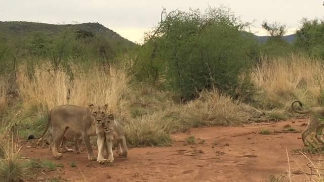 Impressionen von der Safari in Südafrika
