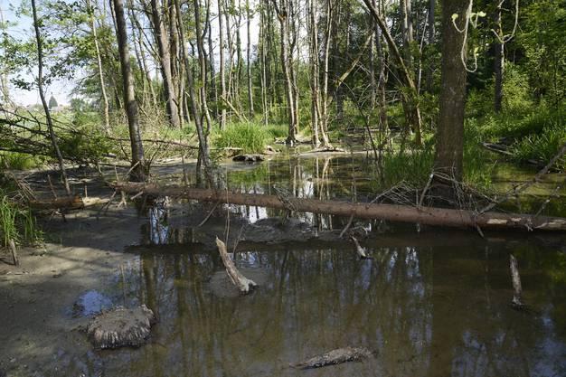 Noch vor einem Jahr stand das Wasser weitaus weniger hoch.