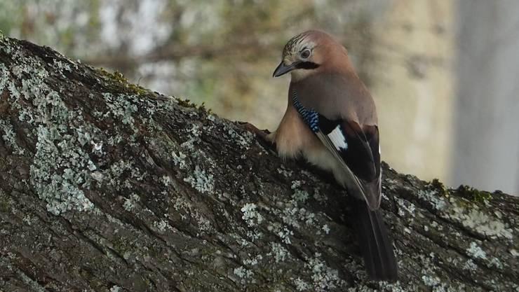 Was ist das für ein Vogel?