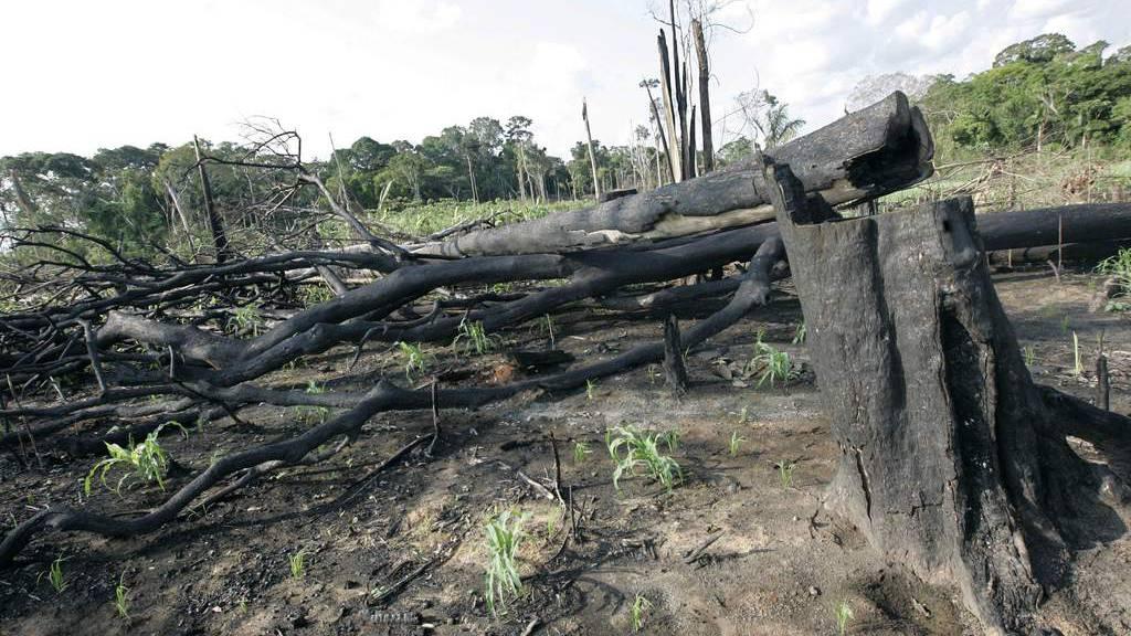 Burnt trees are seen in the remote Amazon town of Xapuri, Brazil, Tuesday, Oct. 30, 2007. (AP/Silvia Izquierdo)