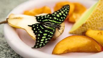 Schmetterlinge Lengnau