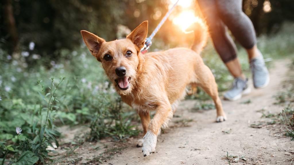 «Sinnlose Überregulierung» – Hundehalter blitzen vor Bundesgericht ab