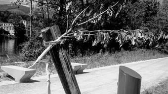 Trauriges Bild: Einer der vier abgebrochenen Jungbäume.