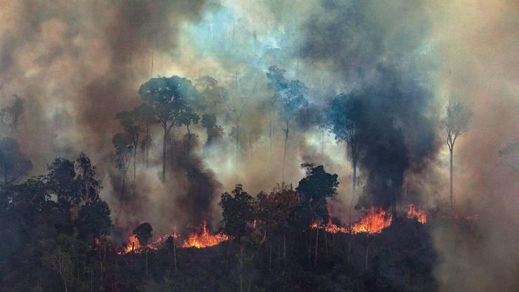 In Brasilien wüten derzeit die schwersten Waldbrände seit Jahren.