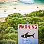 Bei einer Haiattacke vor der Küste Australiens ist ein Taucher gestorben. (Symbolbild)