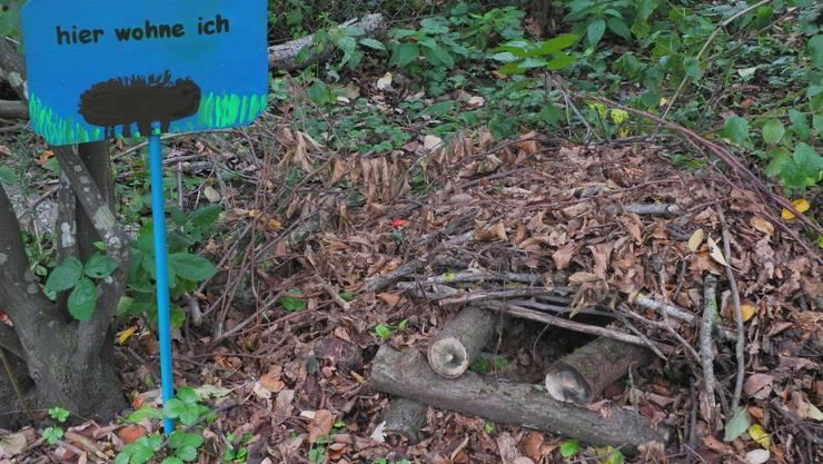 Eine Igelburg im Chrüzacher: Inmitten von Laub, Ästen und Totholz kann sich der Igel verkriechen. (Bild: Maurus Held)