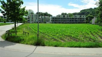 Die Stadt wartet auf geeigneteres Bauland in der Aarenau und lässt das Baufeld 8 (ganz im Vordergrund) definitiv sausen.Ueli Wild