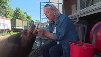 Die berühmtesten Bewohner im Fricktal sind wohl die beiden Senioren-Seelöwen Otto und Cäsar. Sie feiern ihren 29. Geburtstag – eine Weltattraktion.