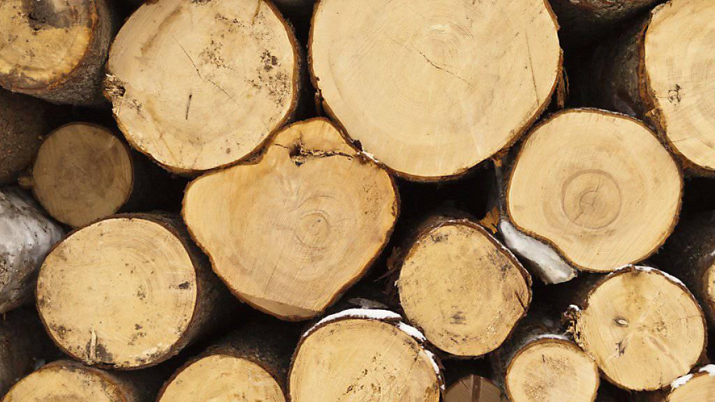 Die Jahrringe zeugen vom Trockenheitsstress der Bäume. (Themenbild)