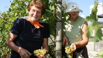 Handarbeit: Anni Schertenleib (links) hilft schon das 41 Mal bei der Weinlese mit. Rechts von ihr schneidet Margrit Baumgartner Trauben. ama