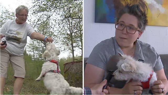Neues Zuhause für beschlagnahmte Hunde: Diese Frauen haben je einen der Westie-Mischlinge aufgenommen.