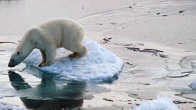 Eisbär auf Arktis-Eisscholle (WWF)