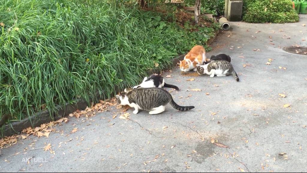 Keine Kastrationsplicht bei Katzen