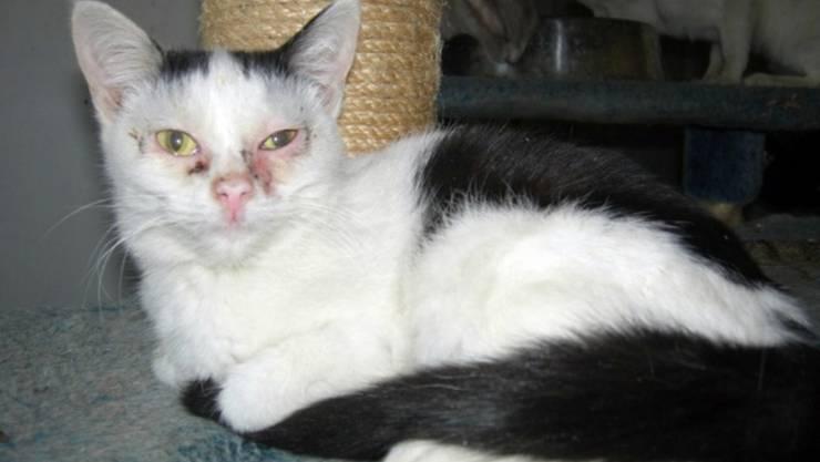 «Die Katzen sahen schrecklich aus», sagt eine Augenzeugin.  Fotos: zvg
