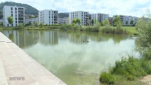 Karpfenplage im Liebefeld