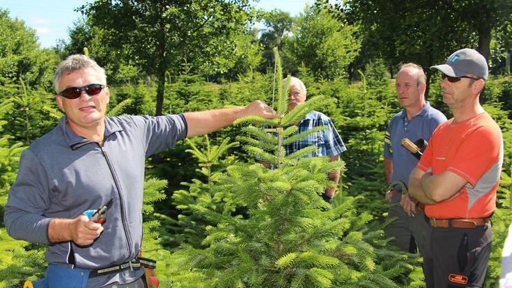 Leonz Küng (links) weiht seine Zuhörer in die Geheimnisse der rentablen Produktion von Christbäumen ein.