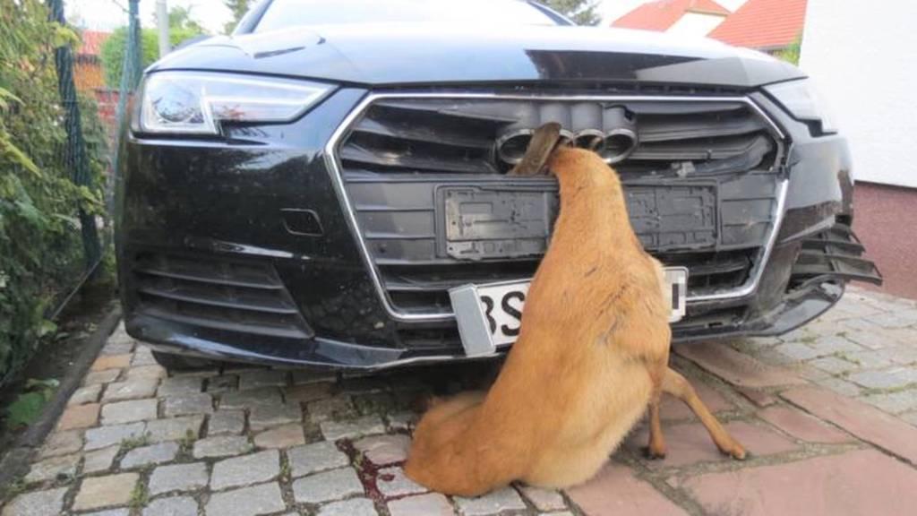 Ungewöhnlicher Wildunfall: Frau fährt kilometerweit mit Reh in Kühlergrill
